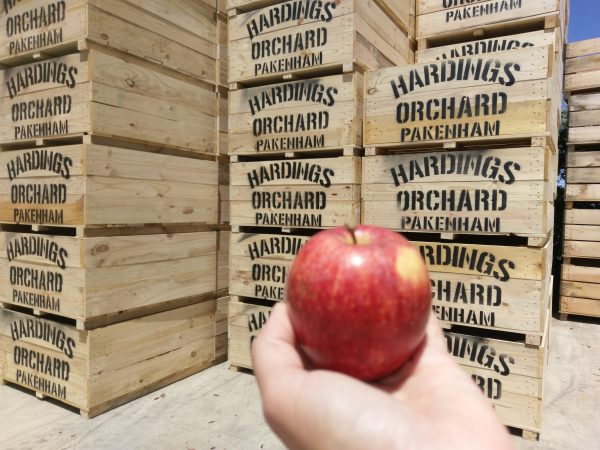 Apple Bin, Timber Apple Bins, Marshal Pine, Timber Products
